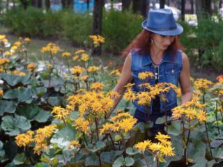 In orange flowers 1